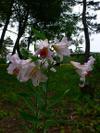Photo_145